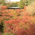 写真: 2014 東福寺@京都
