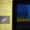 20160312 長崎ペンギン水族館08
