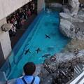20160312 長崎ペンギン水族館15