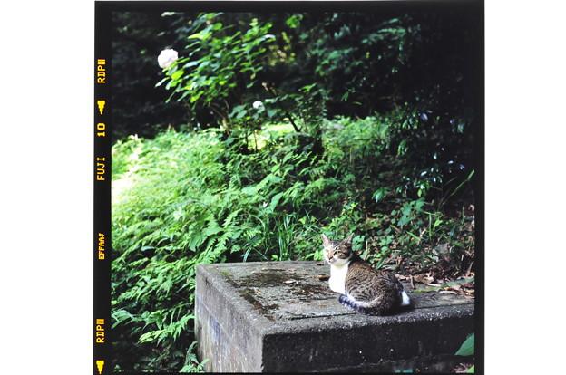 140616紫陽花と猫