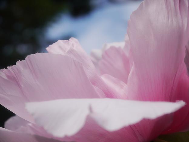 美しき花弁
