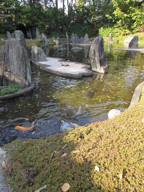 松尾大社・蓬莱の庭 080