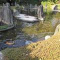 Photos: 松尾大社・蓬莱の庭 080
