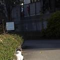 Photos: 日なたの猫
