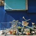 Photos: 青い家