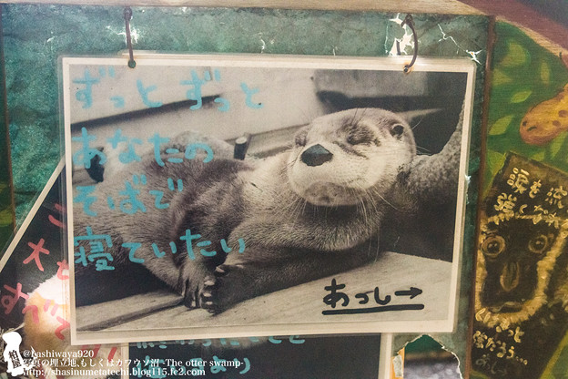 Photos: ikeda1408020096