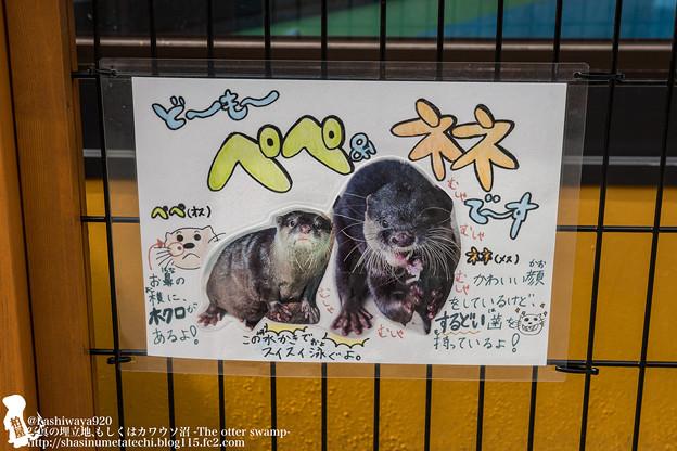 写真: oouchiyama1507120005
