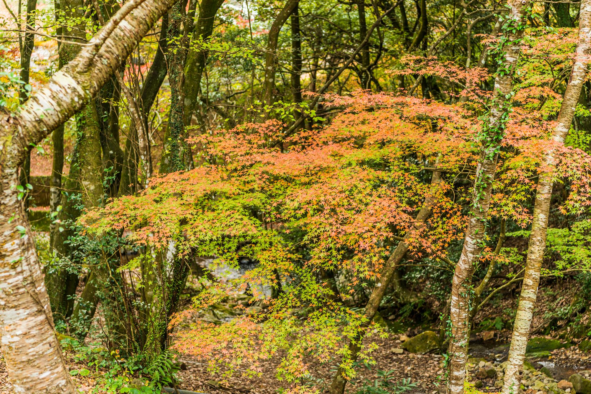 黒髪登山道の紅葉
