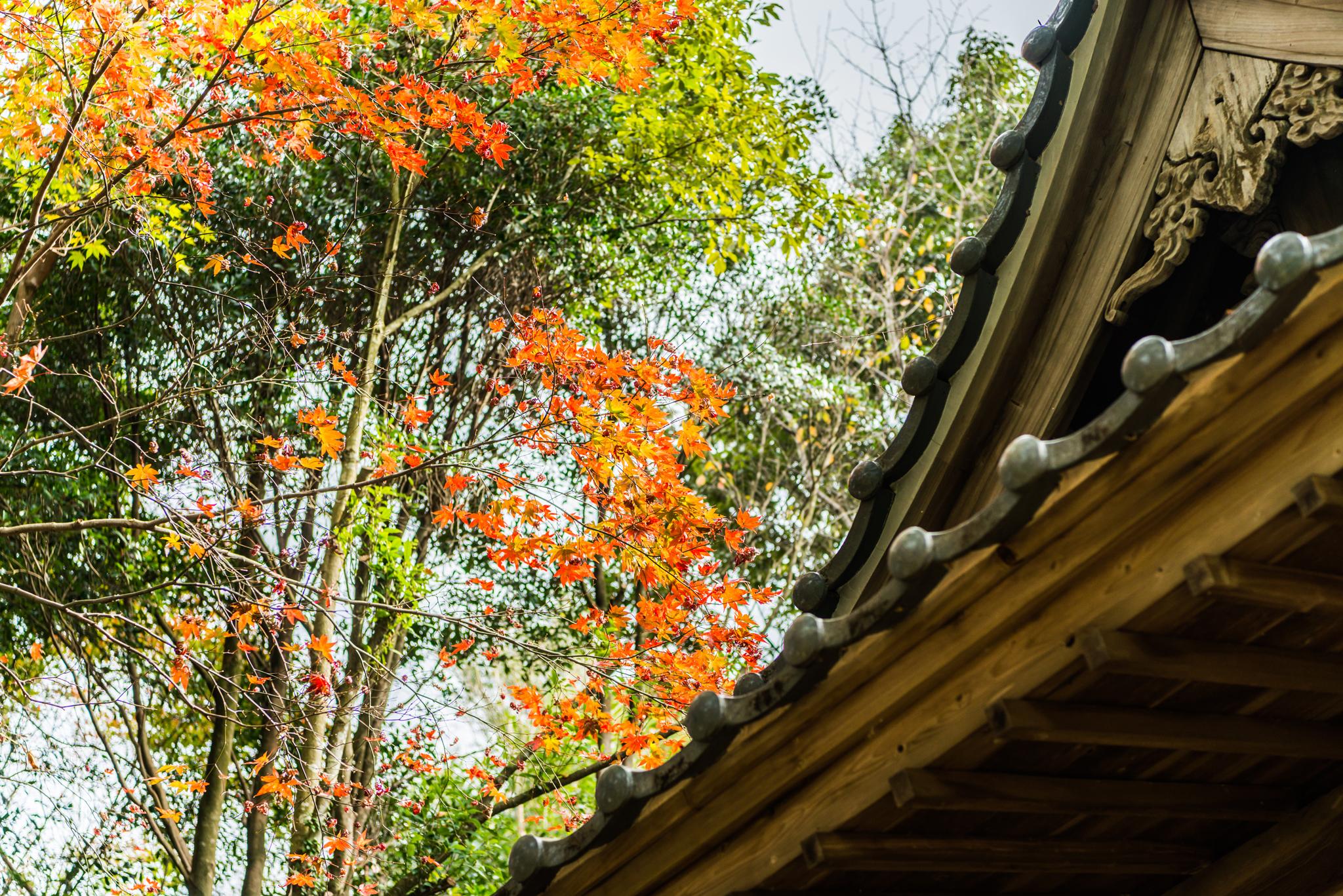 石場神社の紅葉