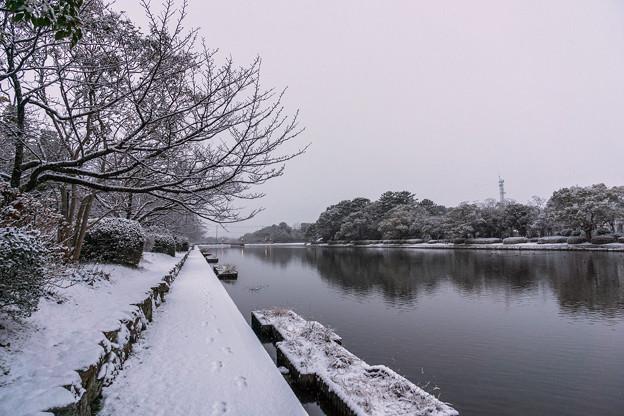 雪の佐賀城堀端-1