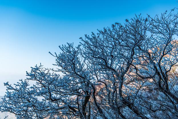 妙見岳の霧氷-1