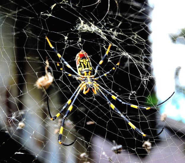 女郎蜘蛛   10:06