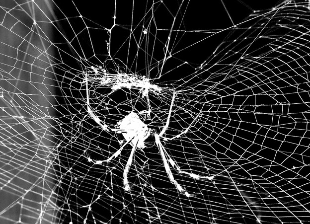 蜘蛛(女郎蜘蛛)の網(モノクロ)  10:06