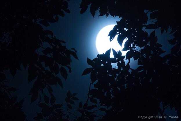 2014年9月9日、満月風景