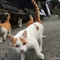 Photos: yamanao999_cats_098