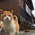 Photos: yamanao999_cats_099