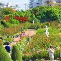 Photos: 谷津バラ園 の園内