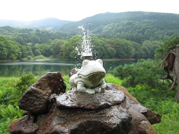蔵王温泉・鴫の谷地沼の水飲みカエル