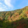 Photos: 箕面の紅葉