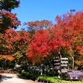 Photos: 勝尾寺の紅葉