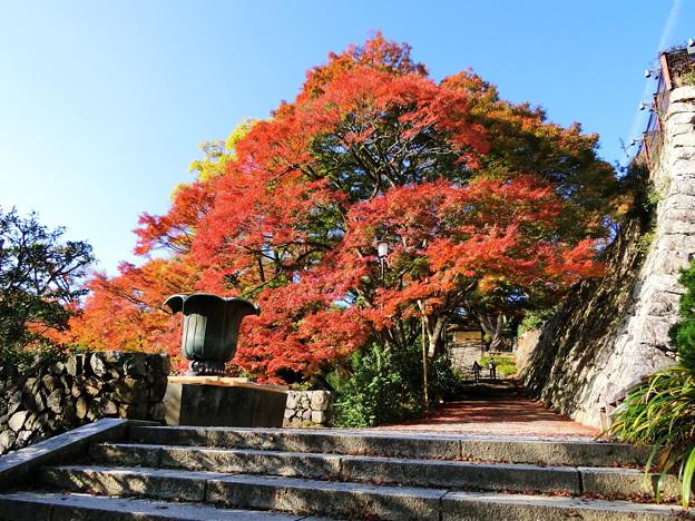 Photos: 勝尾寺の紅葉4