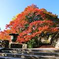 勝尾寺の紅葉4