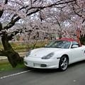 Photos: 前川堤の桜