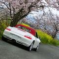 Photos: 畦道の桜と菜の花
