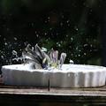 水浴び連写5