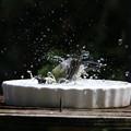 水浴び連写2