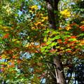 Photos: 鍋平高原の紅葉 1