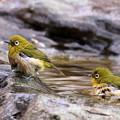 写真: う~ん、気持ち良い湯だぁ!