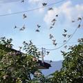 写真: 一斉に飛び立つ雀たち