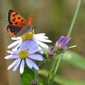 美しい翅を休めるチョウさん!