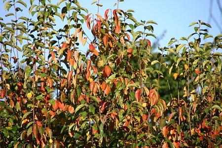 秋がいっぱい…