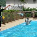 バタフライで泳ぐパル君