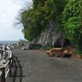 淡島海岸遊歩道