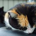 Photos: バイクシートの上で眠る猫