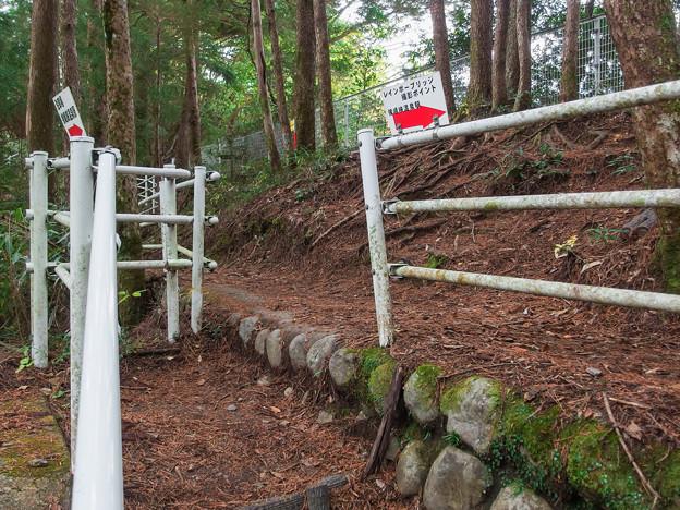 奥大井湖上遊歩道