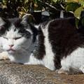 岩本山公園の猫