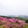 Photos: 長串山つつじまつり