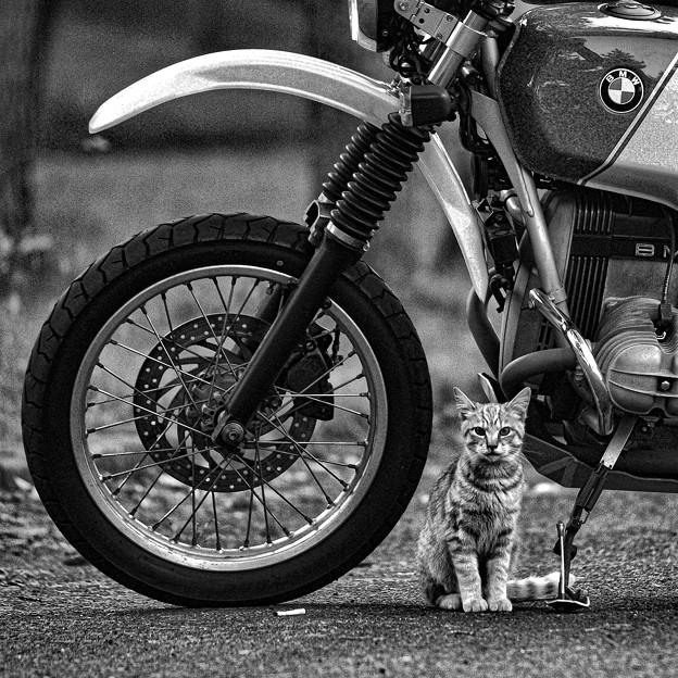 猫とバイクと吸い殻と