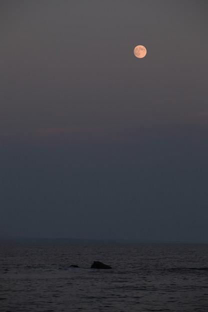 Photos: 名月昇る