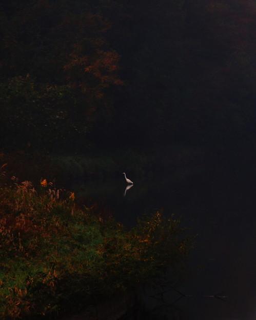 色付く秋と競う
