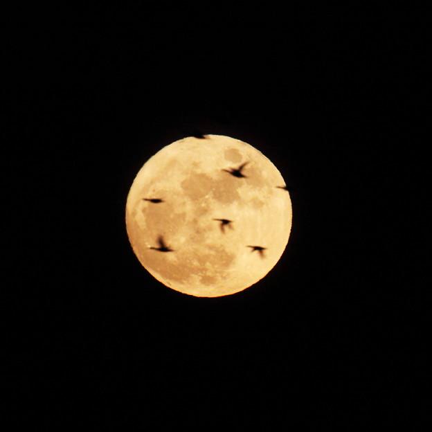 望月と雁1