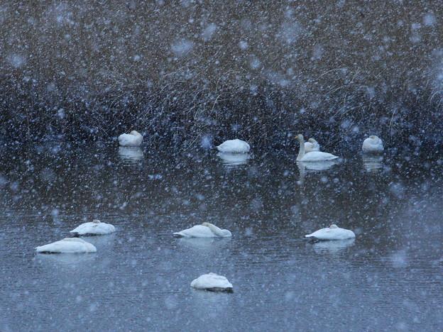 雪降り続く