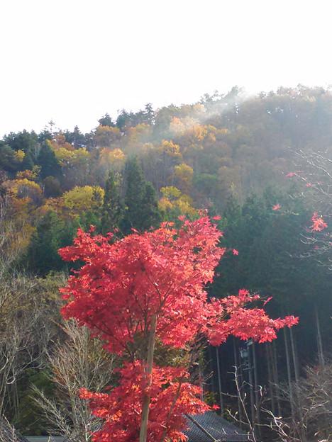 写真: P_20151101_133325 いい色ですね