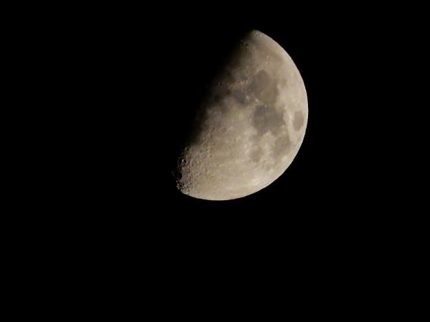 写真: DSCN0071 半月