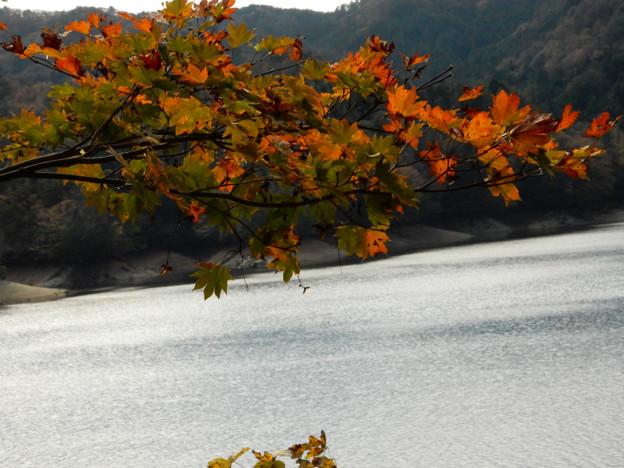 写真: DSCN0120 三河湖8