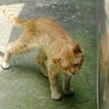 Photos: 2009年8月5日のボクチン(5歳)